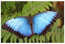 facilitator-butterfly