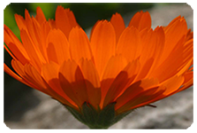 mentoring-flower