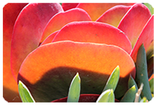 program-flower