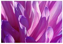 women-circle-flower