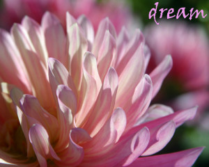 Dream - Women's Workshops, Retreats and Facilitator Training